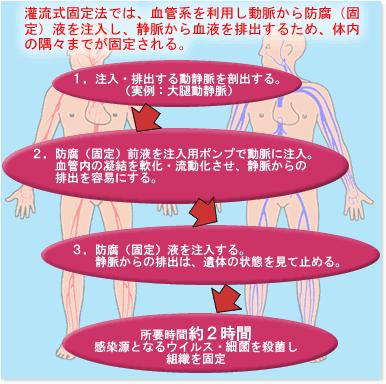 現在の解剖学における防腐固定法